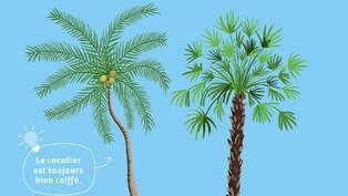 À Varadero, on retrouve des palmiers, des cocotiers ou les deux ?
