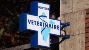Vétérinaires près de Varadero