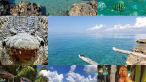 Une belle excursion à faire - La Baie des Cochons - Par René Lopez Zayas