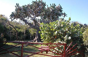 Visite au cactus El Patriarca
