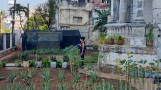 De l'histoire de Cuba - Par René Lopez Zayas - L'agriculture urbaine