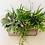 Thumbnail: Succulent Box