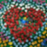 Sean - Flower Festival.jpg