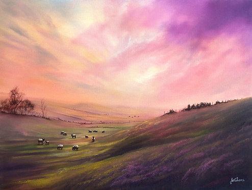 Moorland Dreams