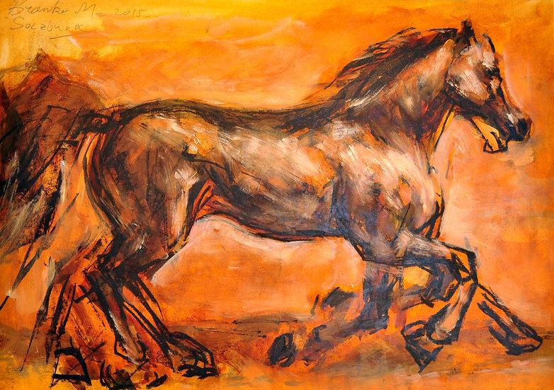 Branko Horse running