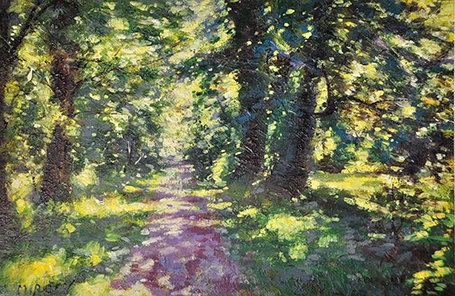 Mircev - forest
