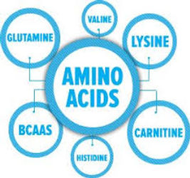 Amino-Acids.jpeg