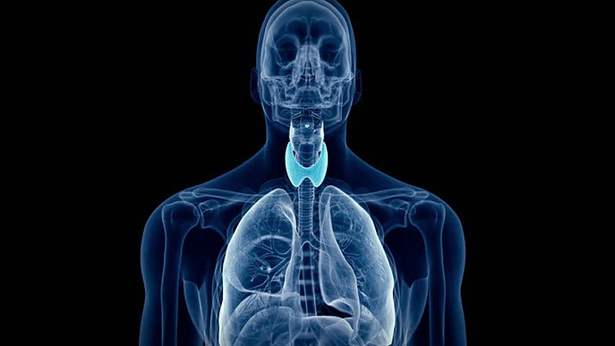 Thymus-gland-and-aging-2.jpg