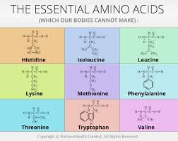 Essential-Amino-Acids.jpeg