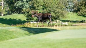 2021 Golf Invitational a success