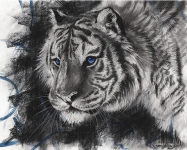 Sapphire Tiger - £100