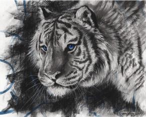 Saphire Tiger (Sold)