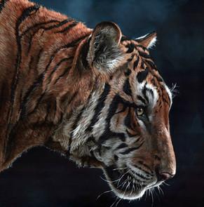 Tiger hd.jpg
