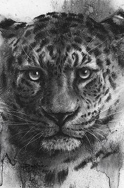Leo ( Sold)