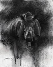Rhino (£400)