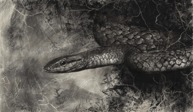 Parrot Snake - £750