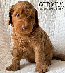 Gold Medal Puppy 6.png