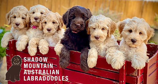 Wagon Riley Puppies.jpg