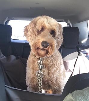 Cali loves car rides!
