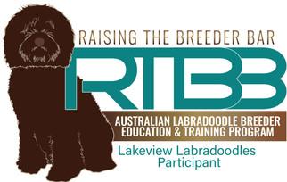 RTBB Lakeview Labradoodles.jpg