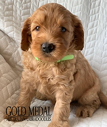 Gold Medal Puppy 5.png