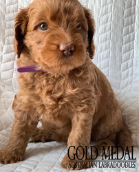 Gold Medal Puppy 3.png
