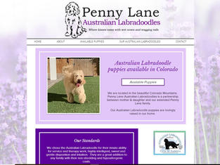 Penny Lane Australian Labradoodles