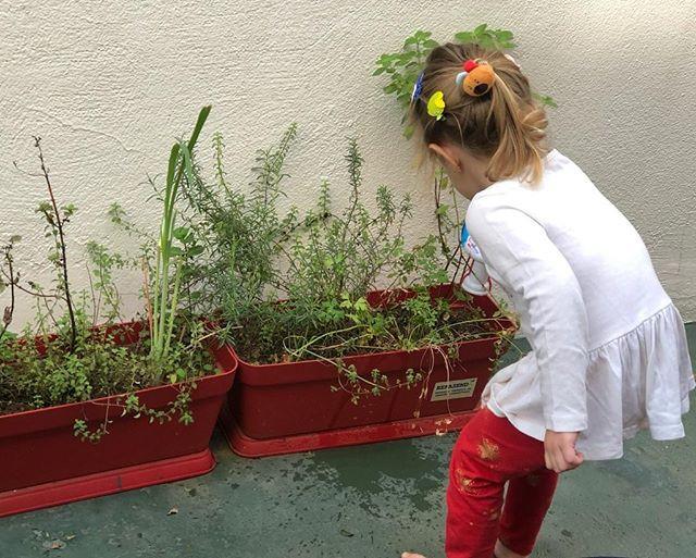 Férias Divertidas - Plantar, cultivar e cozinhar...