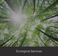 Ecological Services, Ecologist, Environmental Impact Study, Natural Heritage Study, EIS
