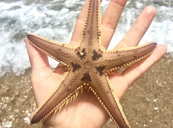 Starfish Small.jpg