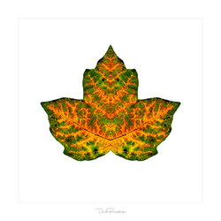 FIRE3_frame_signature