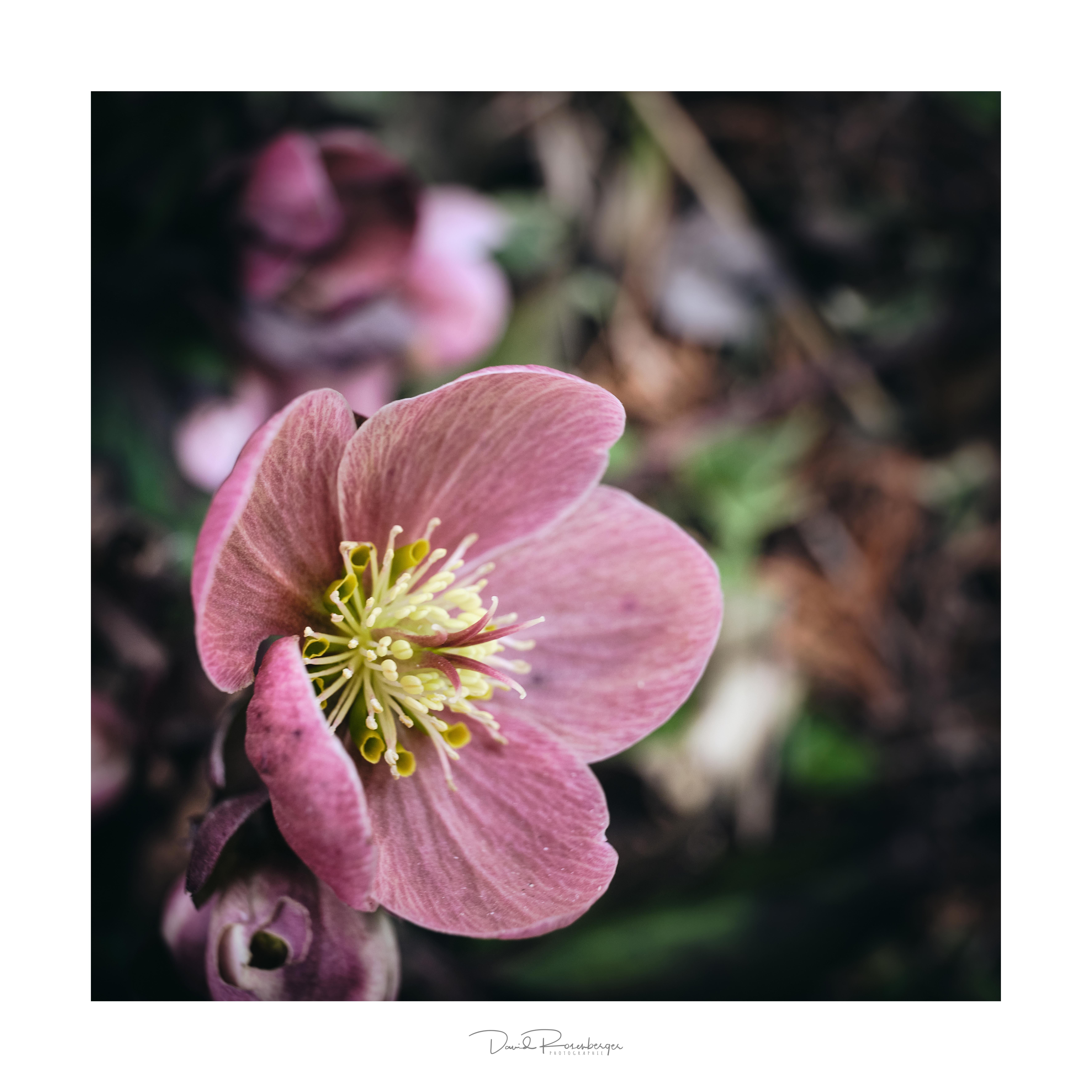 FLOWER1_frame_signature