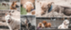 Collage of assorted photos in various sizes of dogs in outdoor, natural landscapes
