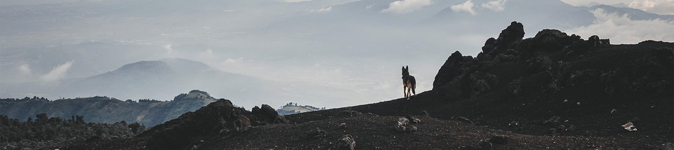 German-Shepherd-dog-stands-at-top-of-mou