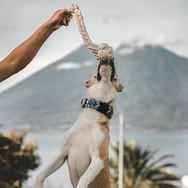beige-and-white-dog-leaps-up-to-snatch-M