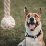 beige-and-white-dog-anticipates-chasing-