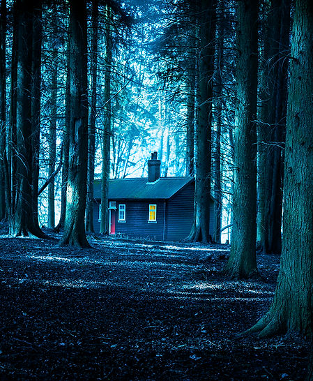 a cabin  in the forest.jpg