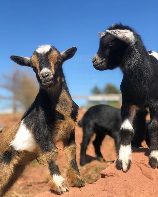 Petting Farm 6