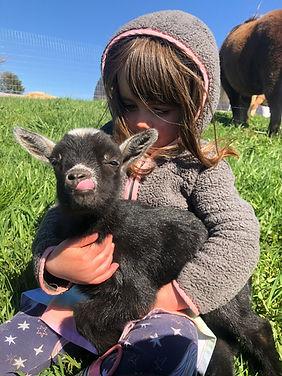 Petting Farm - Alexander and Darlene's Farm Haven
