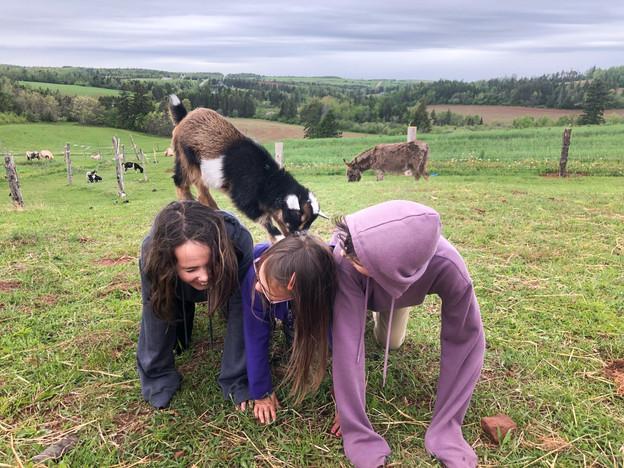 Petting Farm 2
