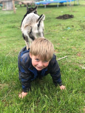 Petting Farm 1