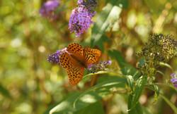 Provence 2008 36