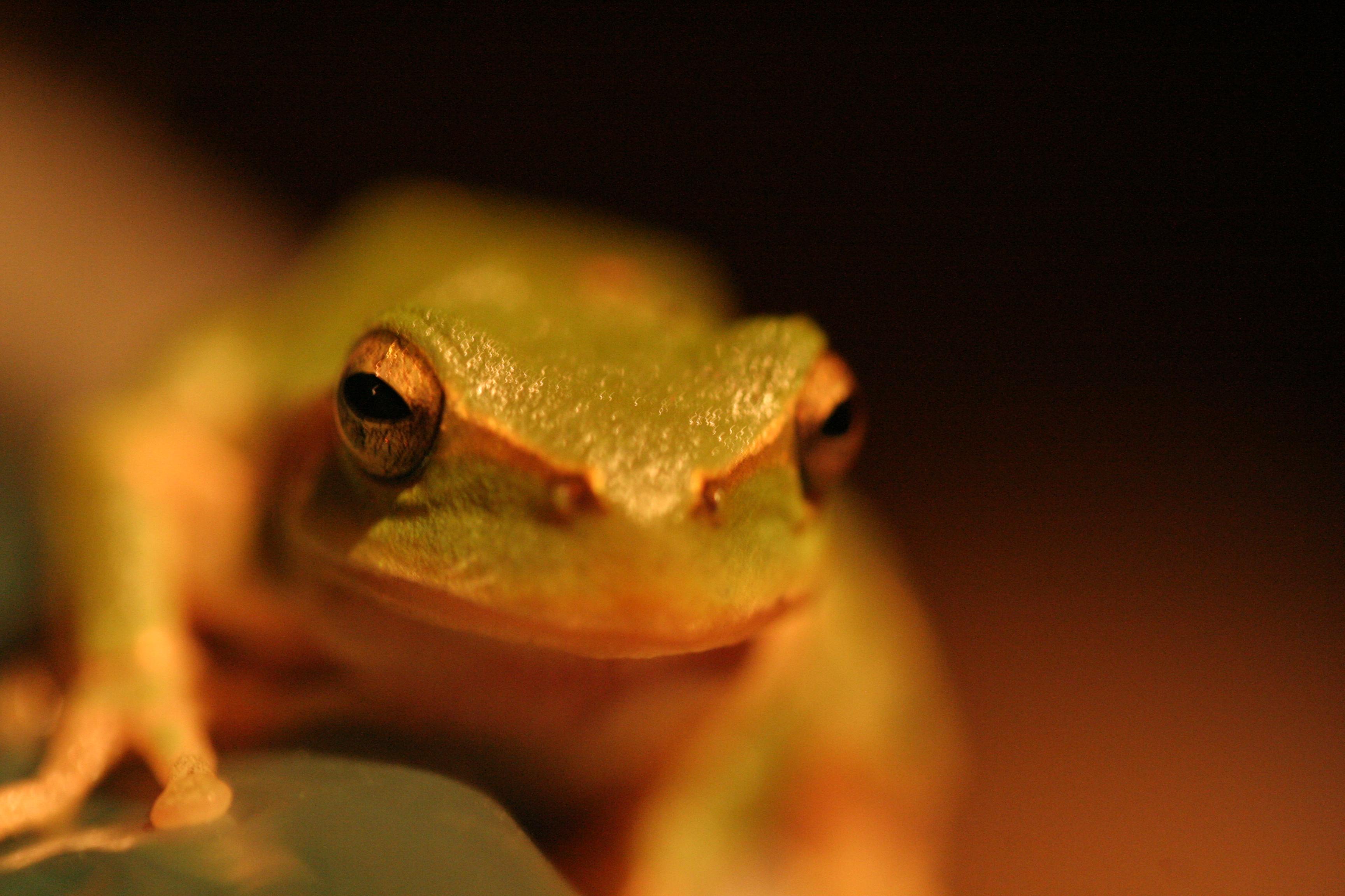frenchfrog