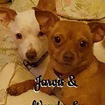Jarvis & Wendy Lu