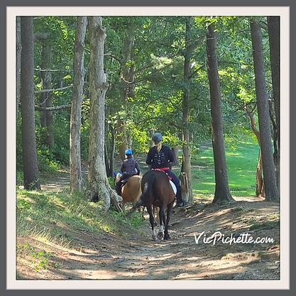 vicpichette.com horses.png