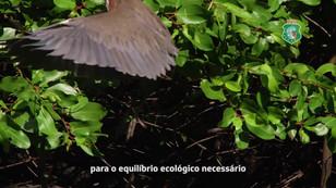 Governo do estado - Parque do coco