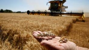 聯合國:供需持續緊繃 9月全球糧價攀上10年高點