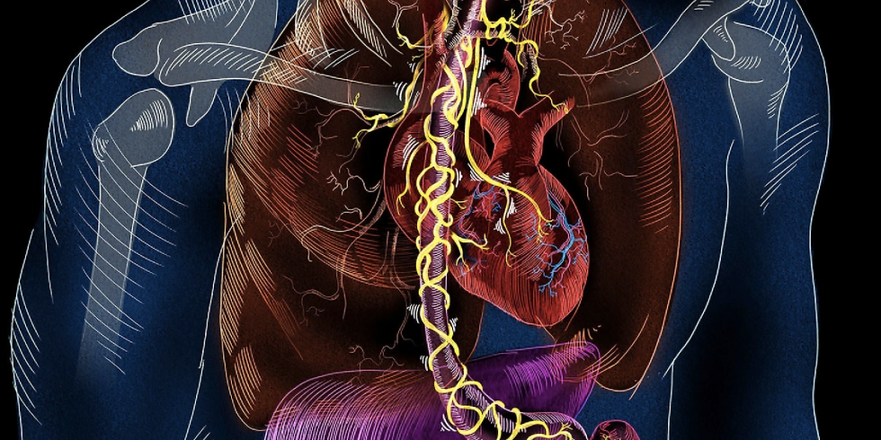 Vagus Nerve: The Key to Health