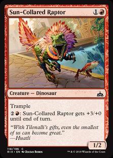 Sun-Collared Raptor