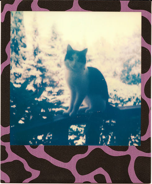 Polaroid_Of_A_Cat_Lucky_Cat_Films_edited